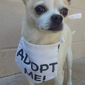 Dog with adopt me bib