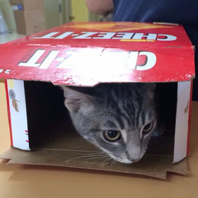 Cat hiding in cracker box