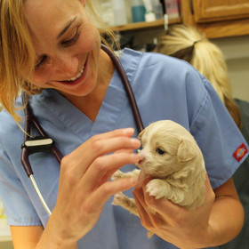 Dr. Rynk holding a puppy while doing a checkup